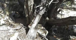 150117125910_rifle_624x351_n_nocredit